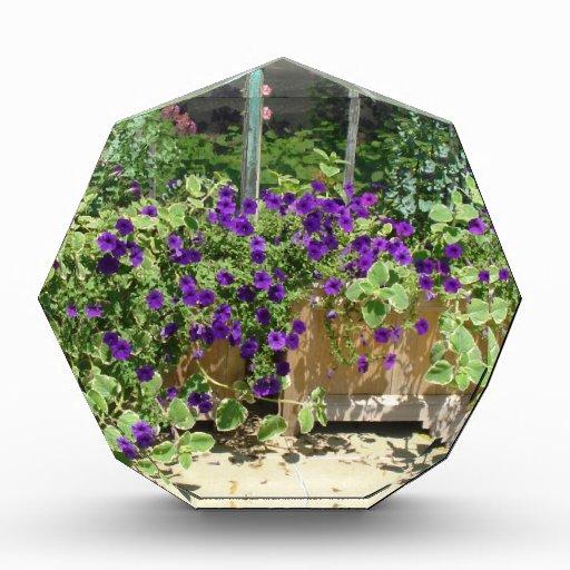 caja de la flor del verano