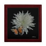 Caja de la mariposa caja de regalo