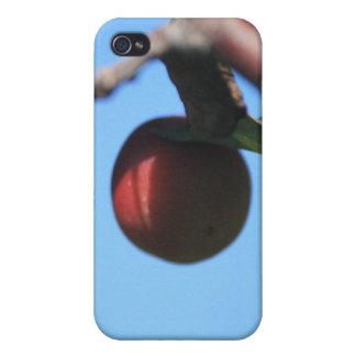caja de la mota de Apple de cangrejo Iphone 4/4s iPhone 4 Fundas