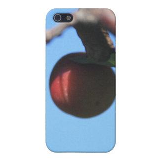 caja de la mota de Apple de cangrejo Iphone 4/4s iPhone 5 Fundas
