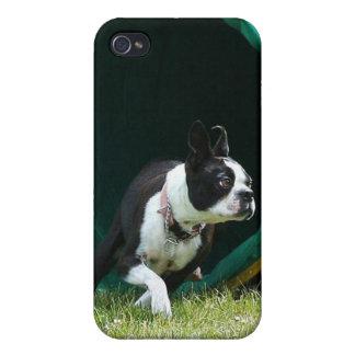 Caja de la mota de Boston Terrier de la agilidad iPhone 4 Fundas