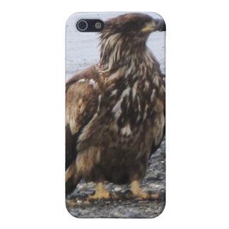 Caja de la mota de Kenai Alaska Eagle de oro Iphon iPhone 5 Carcasa