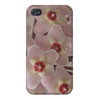 Caja de la mota de la flor de Hoya iPhone 4 Fundas