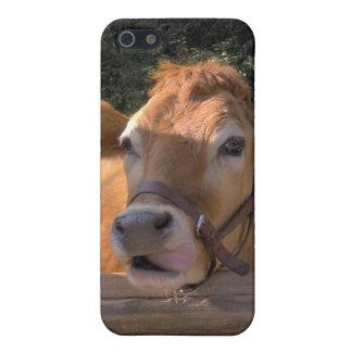 Caja de la mota de la vaca iPhone 5 cárcasas