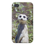 Caja de la mota de Meerkat (001) iPhone 4 Protector