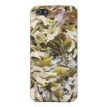 Caja de la mota del iPhone 4 del mosaico de la alg iPhone 5 Protector