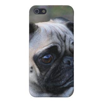 Caja de la mota del perro del barro amasado iPhone 5 fundas