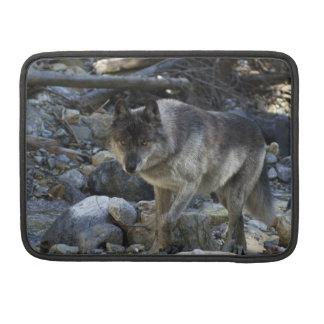 Caja de MacBook del animal salvaje del lobo gris Funda Para Macbook Pro