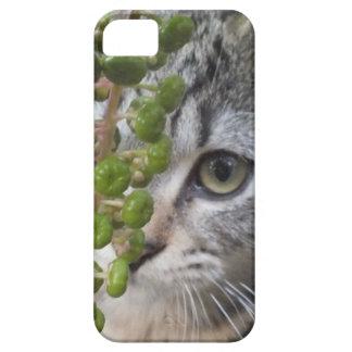 Caja de ocultación del Ojo-Teléfono 5 del gatito iPhone 5 Carcasa