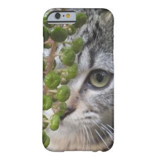 Caja de ocultación del Ojo-Teléfono 6 del gatito Funda Para iPhone 6 Barely There