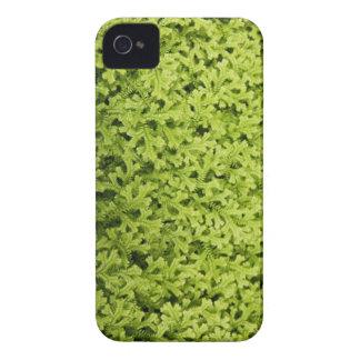 Caja de oro del iPhone 4 de Clubmoss que se arrast Case-Mate iPhone 4 Coberturas