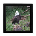 Caja de regalo de Eagle