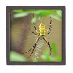 Caja de regalo de la araña de jardín caja de joyas de calidad