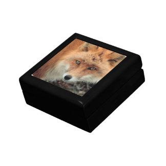 Caja de regalo de la especie del Fox