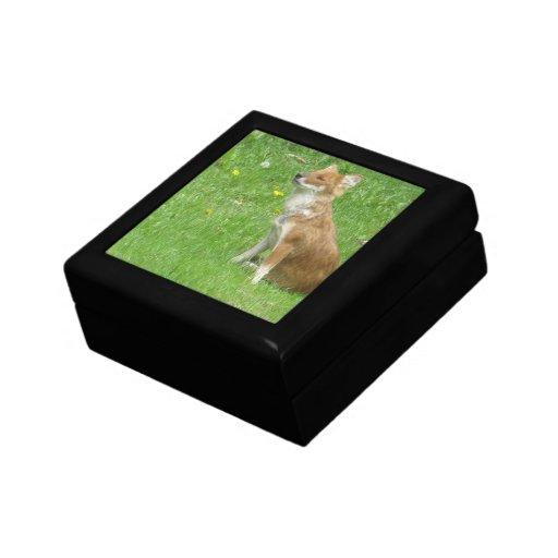 Caja de regalo de la foto del Fox