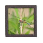 Caja de regalo de la libélula cajas de joyas de calidad