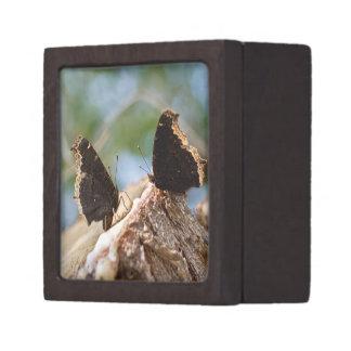 Caja de regalo de la mariposa caja de recuerdo de calidad