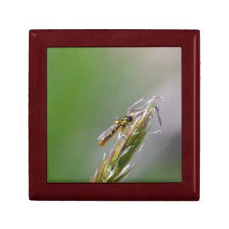 Caja de regalo de la mosca de Syrphid