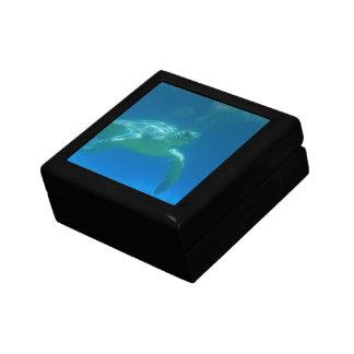 Caja de regalo de la nadada de la tortuga de mar