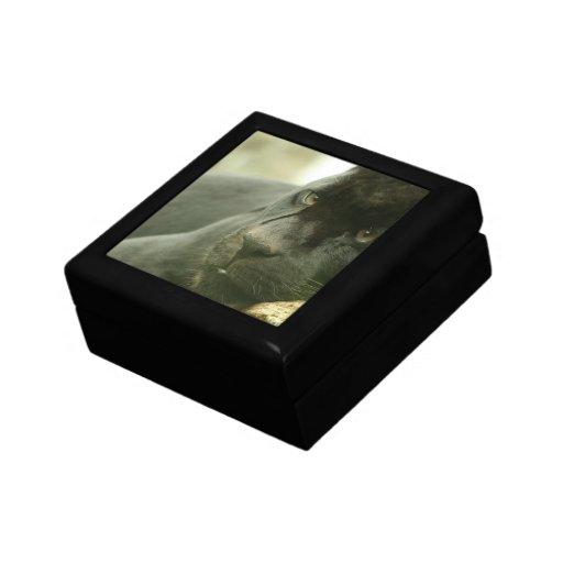 Caja de regalo de la pantera el dormir