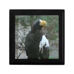 Caja de regalo de la teja de Stellers Eagle