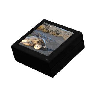 Caja de regalo de la tortuga de mar