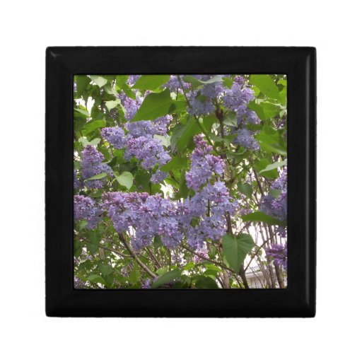 Caja de regalo de las lilas joyero cuadrado pequeño