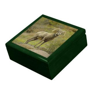Caja de regalo de las ovejas de Bighorn de la mont