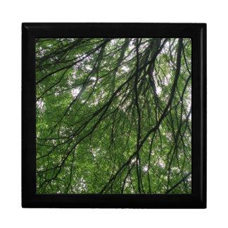 Caja de regalo de las ramas y de las hojas joyero cuadrado grande