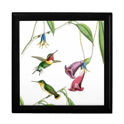 Caja de regalo de los colibríes de Goulds