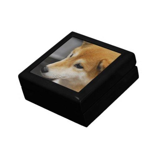 Caja de regalo de Shiba Inu