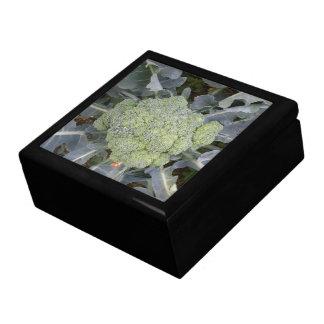 Caja de regalo del bróculi joyero cuadrado grande