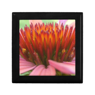 Caja de regalo del Echinacea