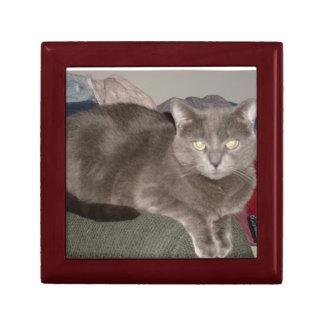 Caja de regalo del gatito joyero cuadrado pequeño