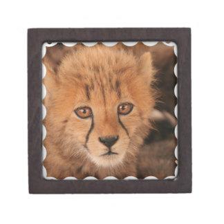 Caja de regalo del guepardo del bebé cajas de regalo de calidad