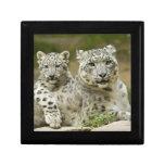 Caja de regalo del leopardo