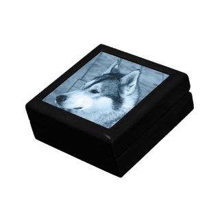 Caja de regalo del Malamute de Alaska