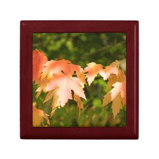 Caja de regalo del otoño de las hojas de arce joyero cuadrado pequeño