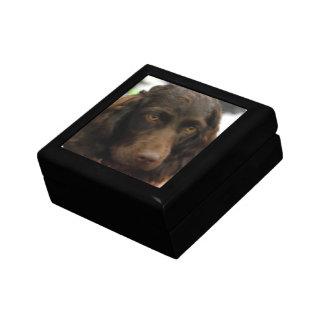 Caja de regalo del perro de aguas de Boykin