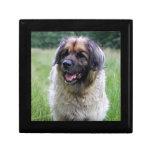 Caja de regalo del perro de Leonberger, caja de la