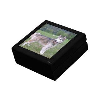Caja de regalo del perro del Malamute de Alaska