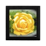 Caja de regalo del rosa amarillo