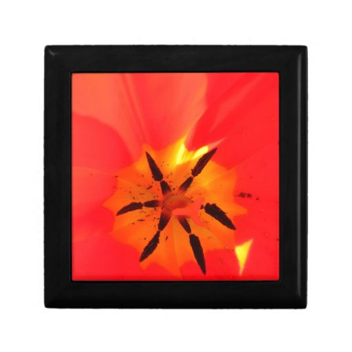 Caja de regalo del tulipán del melocotón