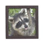 Caja de regalo feliz del mapache cajas de recuerdo de calidad