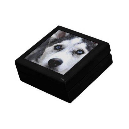 Caja de regalo fornida del perrito