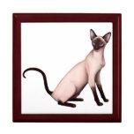 Caja de regalo joven amistosa del gato siamés
