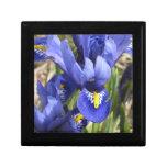 Caja de regalo miniatura del iris joyero cuadrado pequeño
