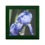 Caja de regalo púrpura del iris