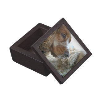 Caja de regalo superior de cocker spaniel del ingl cajas de recuerdo de calidad
