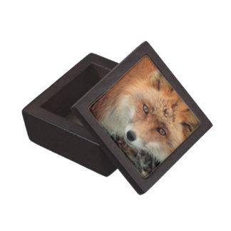 Caja de regalo superior de la especie del Fox Cajas De Regalo De Calidad